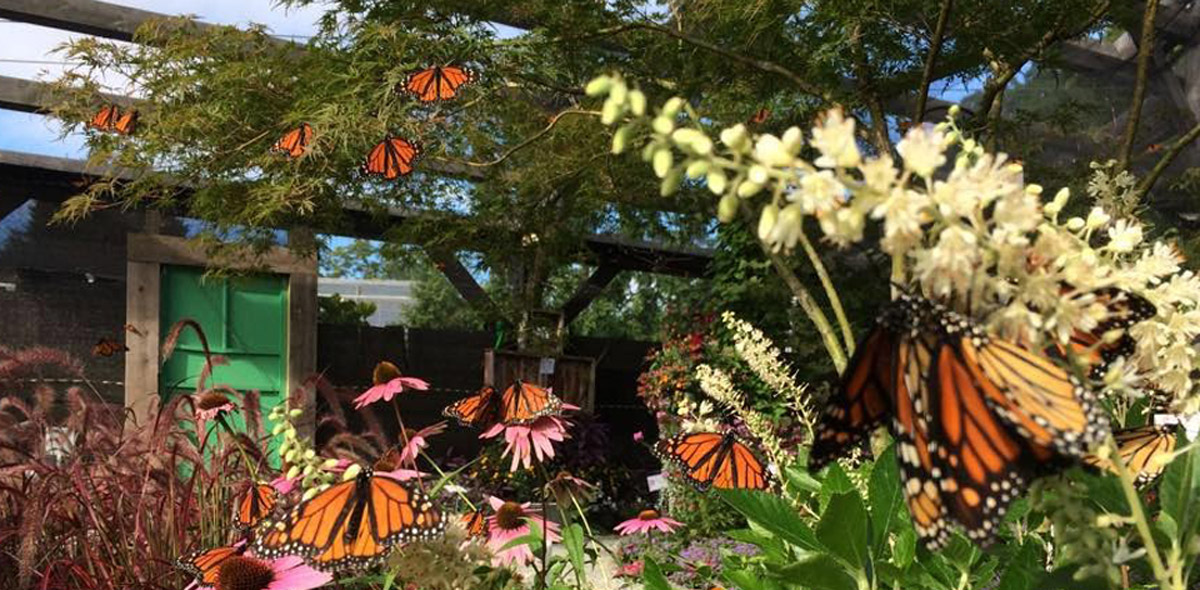 Creekside Gardens