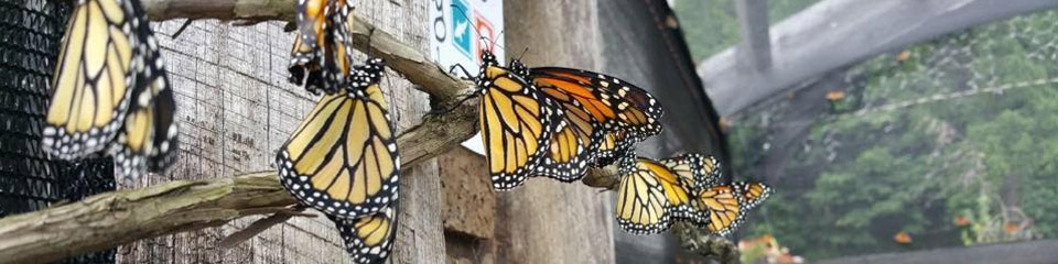 The Butterfly House at Creekside Gardens